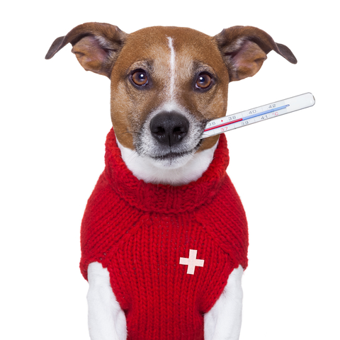 dogfirstaid