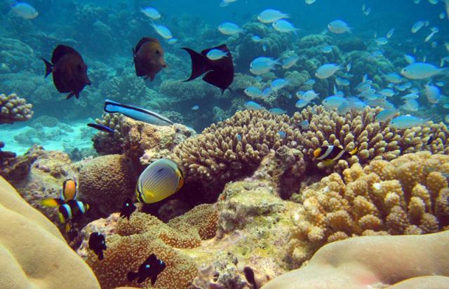 Uligan-reef